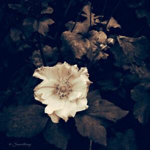 Biancaflower