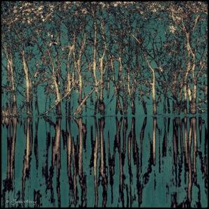 Symphony of trees