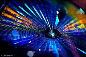 Web in blue
