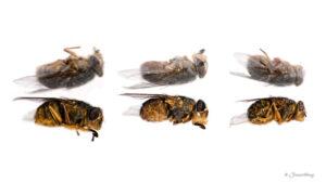 Three flies die and go to heaven II